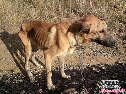 Los perros maltratados, algo triste