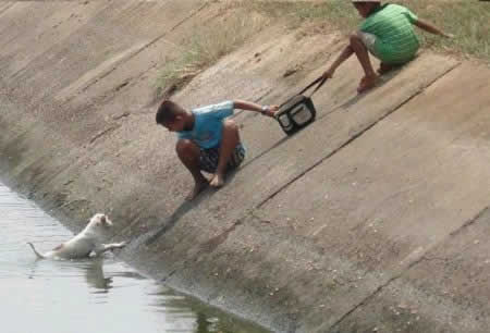Niños Héroes Salvan a Perrito de Morir Ahogado